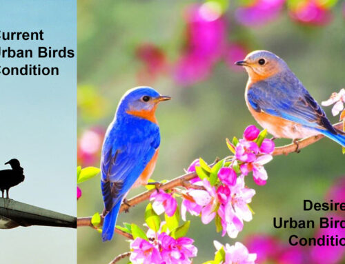 'Well-being for urban birds' workshop by Satyendra Pakhalé / HfG S G / Germany